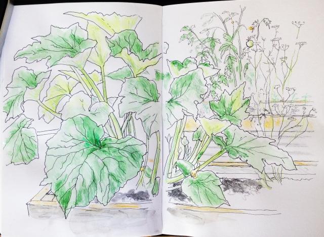 V's vegetable garden